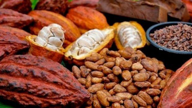 alat belah biji kakao